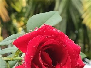 雨水点缀的花朵