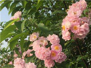 去周�看了看花花,�@五一假期也特�o聊。