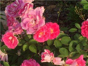 去周边看了看花花,这五一假期也特无聊。