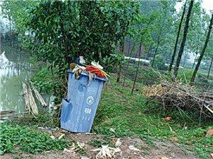 【已回复】桃林乡各村是不是都有环卫工人