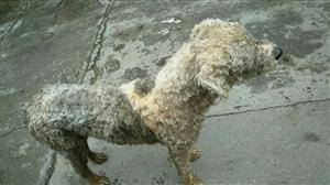 狗狗,谁家的狗狗啊。临塘。