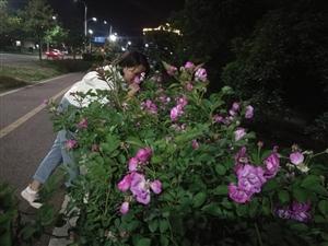 最近到处都是蔷薇盛开的季节,美极了