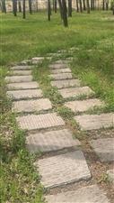 一条小路曲曲弯弯