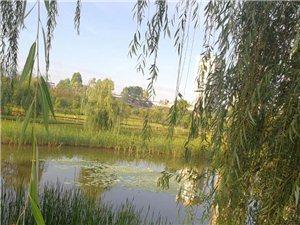 湿地公园晨跑