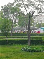 博兴早晨,人民公园上出现了一批人,竟然如此优雅…
