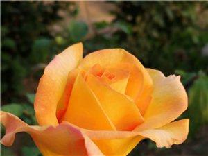 花花世界,各美其美,美美�c共。。。