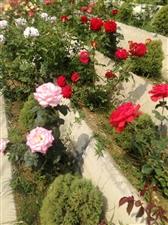 周恩来纪念园(滨州)绿树成荫,鲜花盛开,黄河风情,田园美景,尽收眼底,初夏之韵,美不胜收。