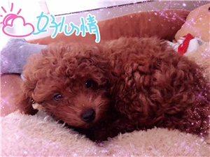 狗狗可乐5月13日在滨医院里跑丢了,刚剃了毛,毛很短,看着很瘦,大长腿,脖子上戴着蓝色绳子,捡到的请