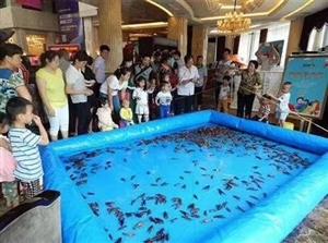 周末亲子活动,到五洲国际钓龙虾看门面