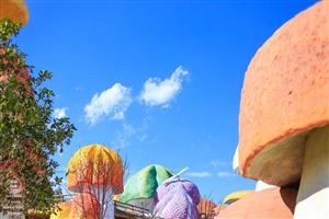 最近这个蘑菇街挺火的,闲暇时也去转了转,大周末的,向大家问好早安,各位!