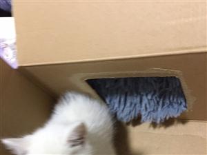小猫咪领养