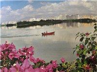 琼海籍摄影家王裕超与海南省的省花三角梅的花缘2019年5月1日由琼海市