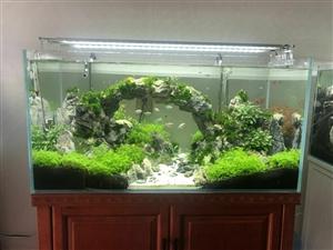 山木水景开业啦山木生态鱼缸把大自然带回家