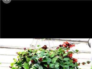 仁寿城区机关食堂需招勤杂工(限50岁以下的女性),要求勤快爱干净,动作麻利,熟手有电瓶车,工资280