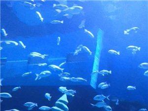 �酃夂Q�O地海洋世界