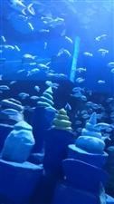 寿光海洋极地海洋世界
