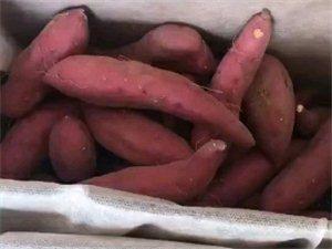 鲜蜜薯蜜薯好好吃