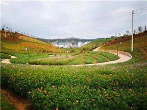 寻乌网红景点,仅离华南汽车城数百米,你有去过吗?
