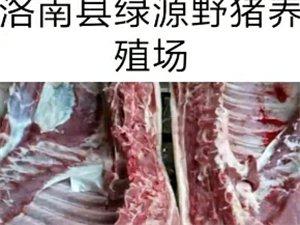 端午��n需要野�i肉�系