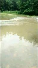 昨天晚上下了一场大雨,导致我们过不了河,我孩子今天发烧去不了医院,河流急我不敢过,导致孩子上不了学,