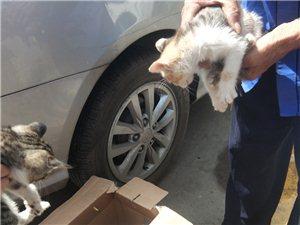 有喜欢小猫咪的朋友,速来领走不用谢,一窝5个可爱的小猫咪??,可以养活。