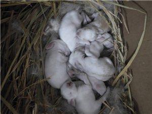 又一批野�u,兔子
