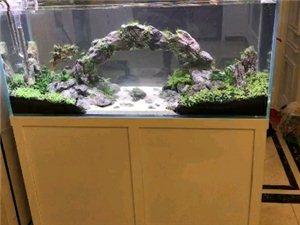 山木生态鱼缸把大自然带回家