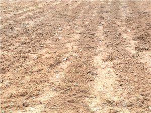 麦子都收起来了玉米也种好了就等老天爷下雨了看了一下近期的天气预报好久都没有雨这可咋弄愁