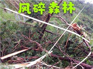 新京葡棋牌的龙卷风有点厉害。