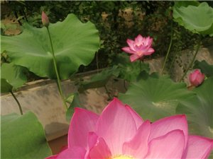 周恩来纪念园(滨州)鲜花盛开,夏景如画,真是游园观光,瞻仰纪念的好地方,黄河东入海,滨韵蒲风美,绿荫