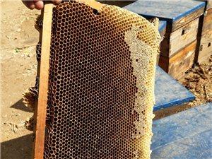 只�u好蜂蜜
