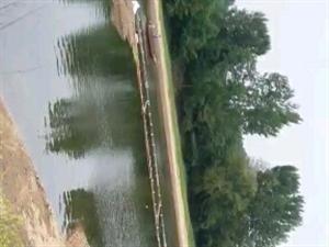 河流��~,蔡��孜沙�龈浇�。