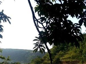 三官庙龙曲村堡梁峰夏忙前这丰收在望的风景线真是美不胜数及美美哒。