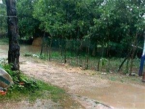 蓝田2019忙后的第一场夏雨滋润了万物浇透大地。