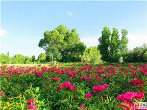 夏天――与秋天不一样的金塔胡杨林