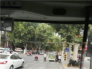 位于市面粉厂(好饰家)__老批发街南路口有多处树杆树枝遮挡信号灯现象,希望有关部门见后处理