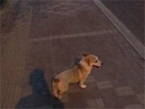狗狗已�找到感�x好心人的�P注感�x