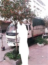 福田奥铃2011年排半4米箱货车