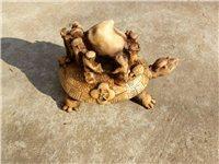出售长寿龟