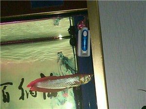 自养鱼出售,非诚勿扰
