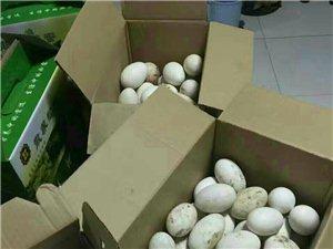 出售自家散养鹅蛋
