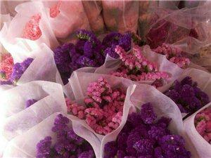专业批发各种鲜花