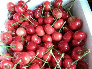 招遠自己家種的大櫻桃100元十斤