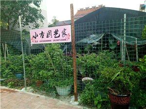 绿植花卉大棚