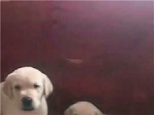 宠物狗狗店特卖