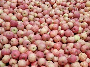 優質蘋果,尋找批發商