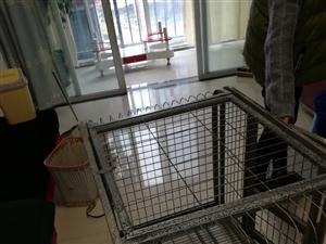 8陈新宠物笼子。可以养狗要。鸡等等动物。要的联系我。电话13098500856
