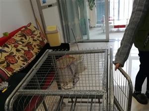 宠物笼子。给钱就卖。可以养大狗。电话13098500856