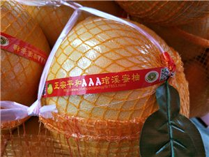 正宗福建和平柚子批发零售