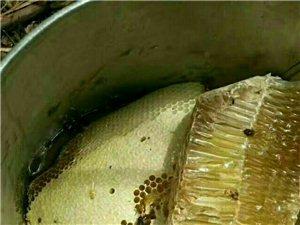 野生蜜蜂糖出售